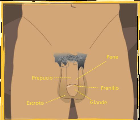 Conoce tu cuerpo: Órganos genitales femeninos y masculinos | Alguien