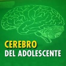 Así funciona el cerebro adolescente